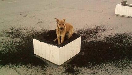 funny_dog_make_a_mess_1014