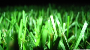 fresh-cut-grass_00443177