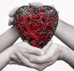 human heart02