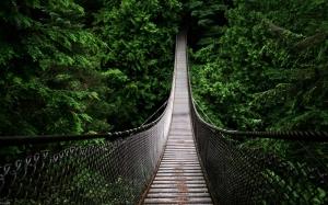 Swinging-bridge-high-tree-tops-cable