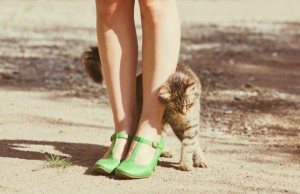 kitty-rubbing-legs-640x414