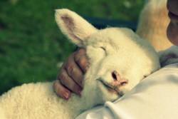 Shepherd and Sheep_0