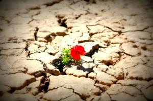 istock_flower_in_desert_med