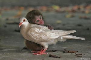 animal-love-3058