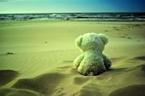 alone-beach-bear-beautiful-cute-just-wondering-Favim.com-70436_large