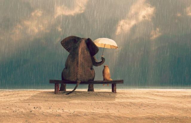 6360715720686232871959383737_elephant-dog-kindness