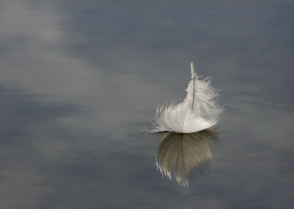 vulnerable-feather-on-lake-vulnerability